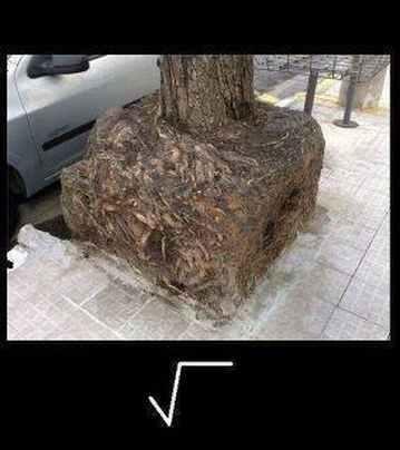 La real y verdadera raíz cuadrada